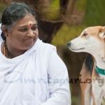 אמה וטומבן, הכלב של האשראם